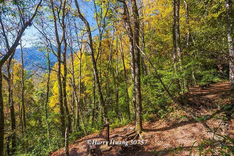 Harry_30757,霞喀羅國家步道,霞喀羅古道,國家步道,古道,步道,楓葉,楓樹,楓紅,秋季,秋天,新竹縣,尖石… | Flickr