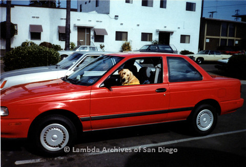 P151.021m.r.t Dog sitting in drivers seat of red car