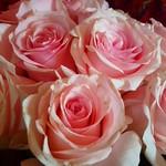 2018 05 06 Roses