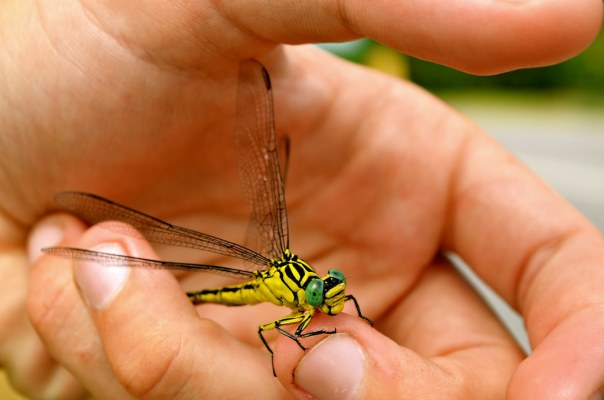 Holding a Dragonfly