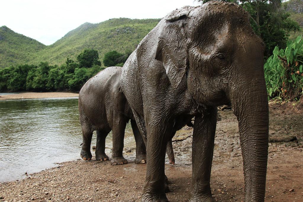 Elephant's Sunscreen - Thailand - July 2012