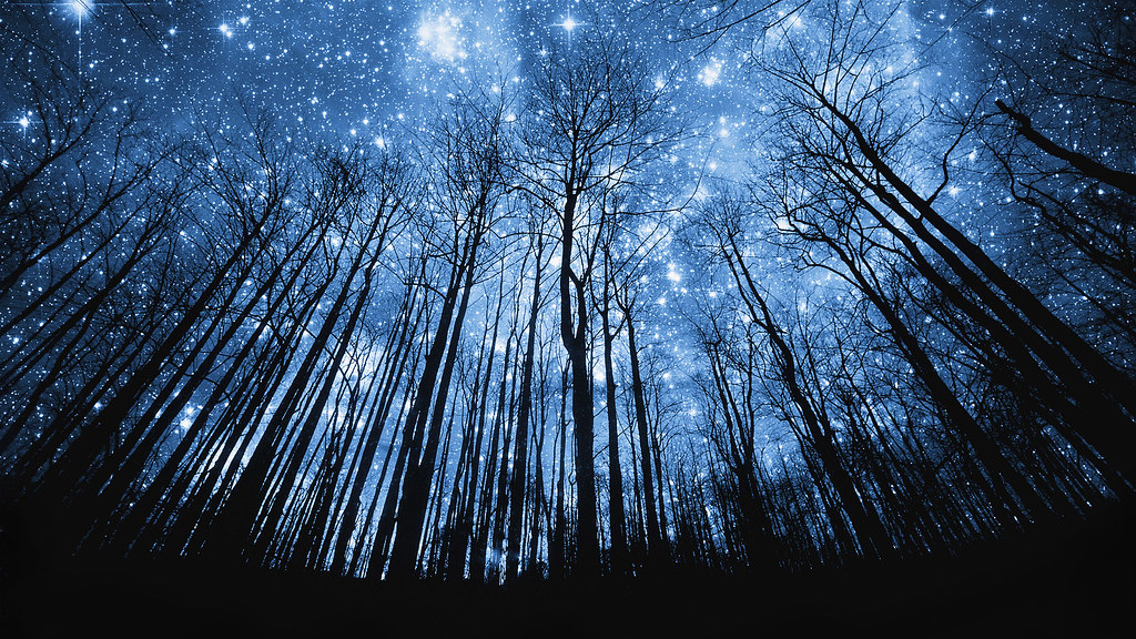 3d Wallpaper Hd 1920x1080 Free 42 15688576 Tree Silhouette Against Starry Night Sky
