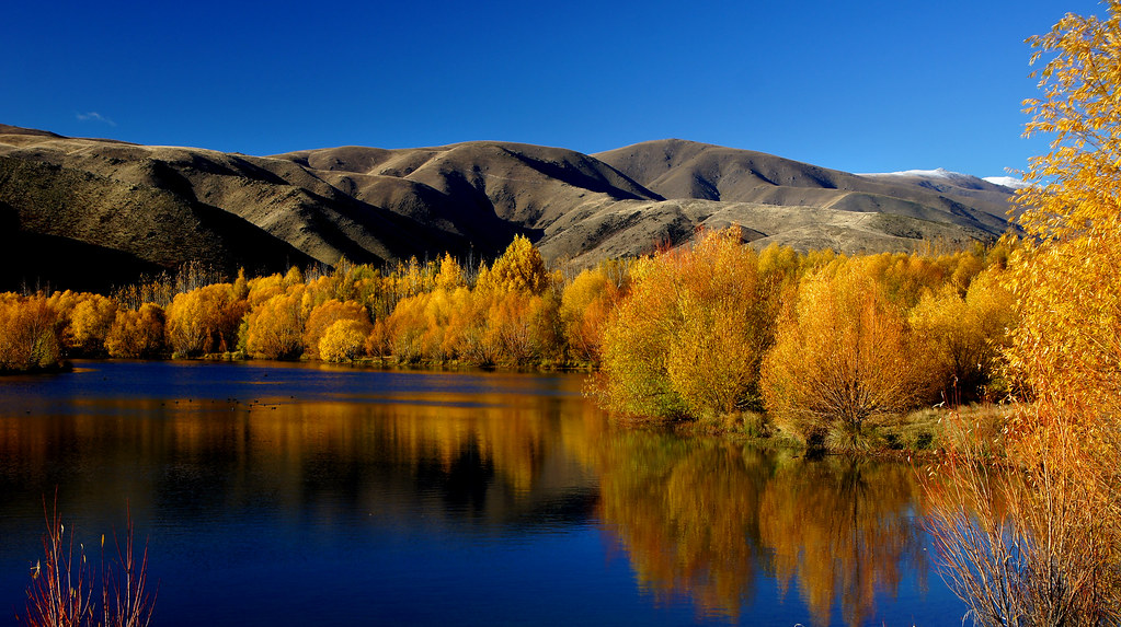 Free Desktop Wallpaper Fall Trees Autumn At Twizel New Zealand Bernard Spragg Nz Flickr