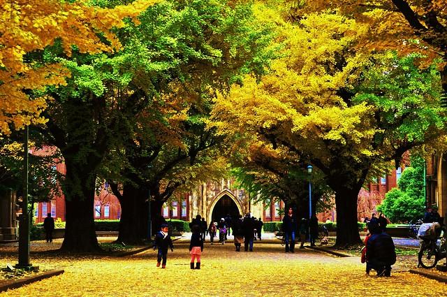 Autumn foliage, University of Tokyo, campus Hongo