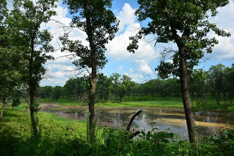 Miller Woods pond