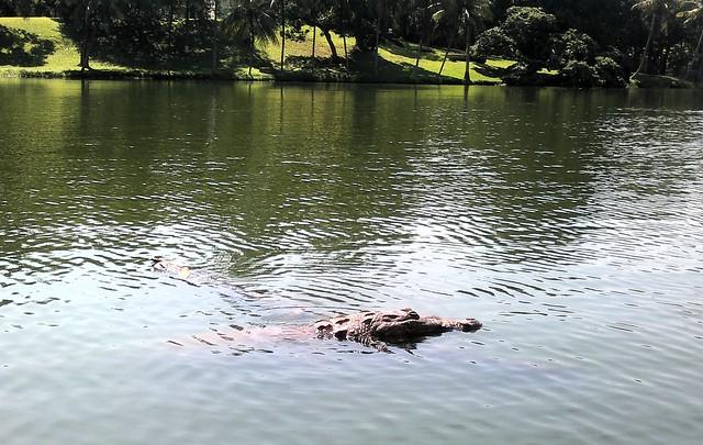 Kayaking next to big wild alligators! by bryandkeith on flickr