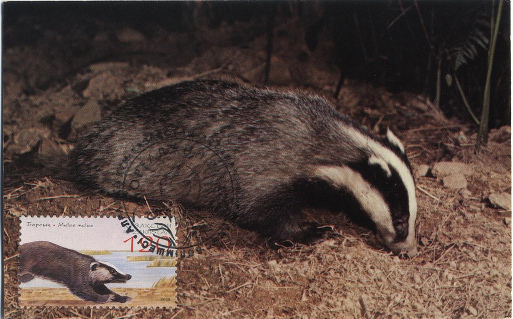 Kazakhstan-狗獾-MC   狗獾極限片 Maximum card of European badger 獾。也…   Flickr