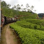 13 Viajefilos en Sri Lanka. Tren a Ella 33