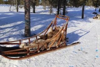 Our sledge