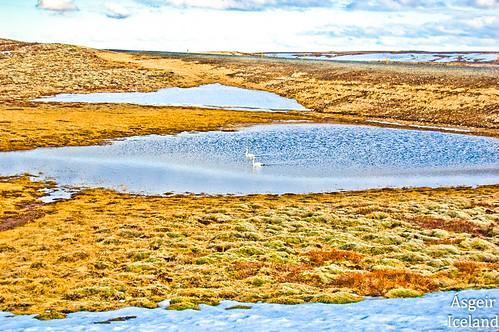 Lyngdalsheiði/Iceland | lundur/Iceland | Flickr
