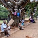 14 Viajefilos en Sri Lanka. Yala 46