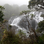 12 Viajefilos en Sri Lanka. Nuwara Eliya 29