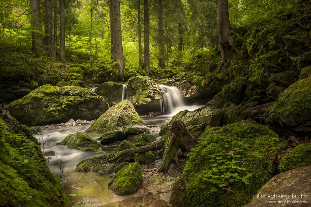 Beautiful Forest Julien Chalendard Flickr