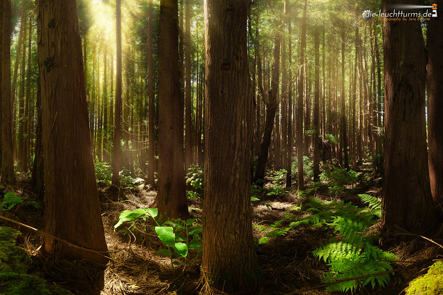 Enchanting forest #2