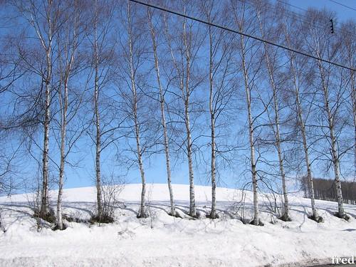 40327北海道 079 | 良月 | Flickr