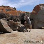 Viajefilos en Australia. Kangaroo 46