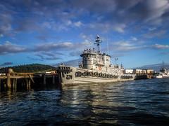 Bellingham Harbor with Moondance Kayaks-74