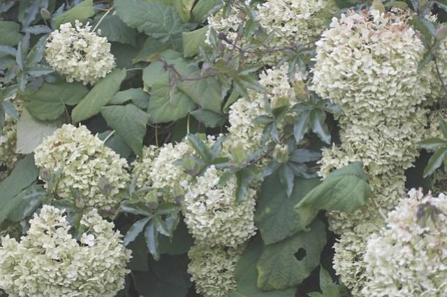 bloemen in de tuin september 009.JPG.ovf