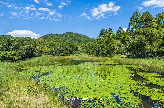 Harry_38664a,陽明山,冷水坑,生態池,水池,湖泊,冷水坑遊憩區,內雙溪源頭,山區湖泊,環湖步道,冷擎步道… | Flickr