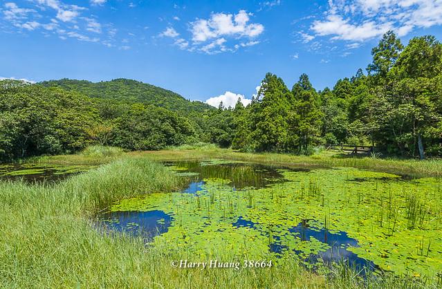 Harry_38664,陽明山,冷水坑,生態池,水池,湖泊,冷水坑遊憩區,內雙溪源頭,山區湖泊,環湖步道,冷擎步道,… | Flickr