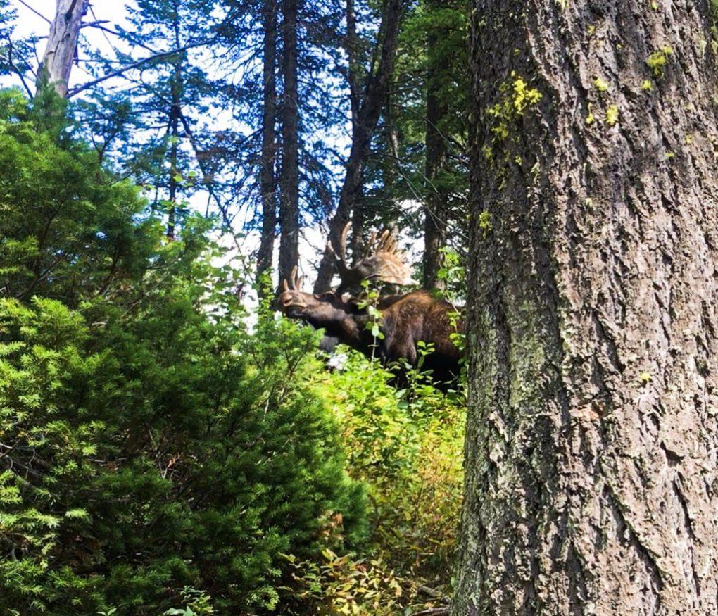 Hiking Grand Tetons Moose at Grand Tetons