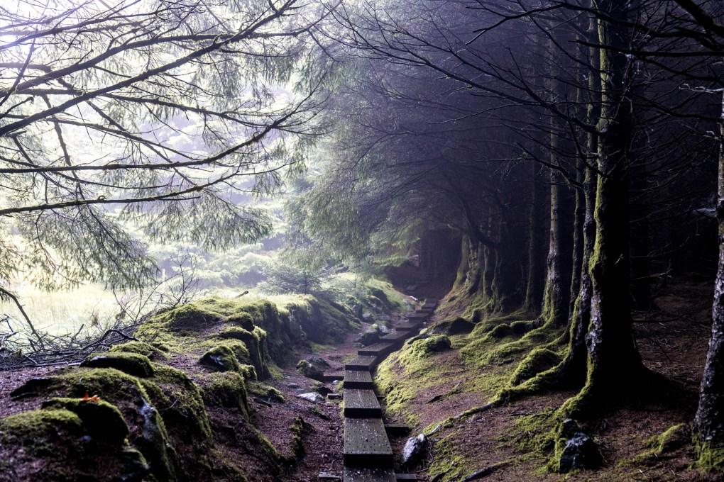 Ballinastoe Woods, Wicklow, Ireland