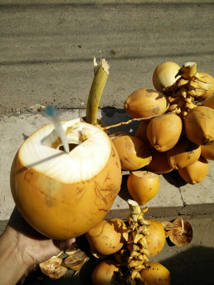 You can't go to Sri Lanka and not drink coconut water!
