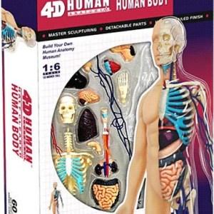 Anatomy model lichaam