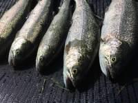 Virtual Fishing Guide