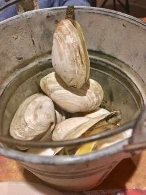 bucket of fresh steamed clams