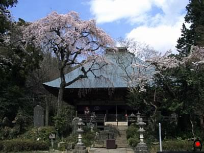 西明寺本堂と桜