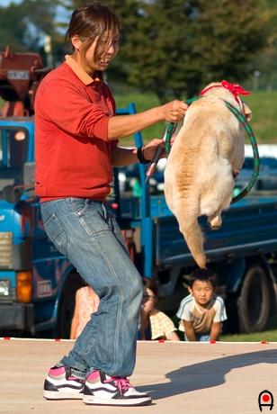 小さい輪を飛んでくぐる犬の写真