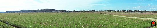 益子コスモス祭り展望台からの秋桜畑の写真