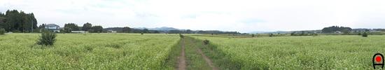 益子のそば畑約360°パノラマ写真