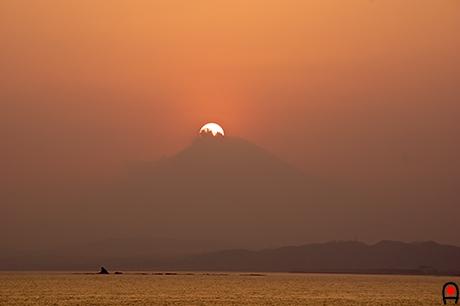 富士山に半分沈む夕日の写真