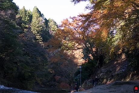 粟又の滝上部の写真