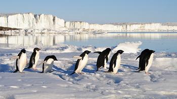 南極に移住する白人