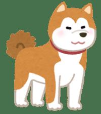 秋田犬が可愛い