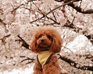 花見をしている犬