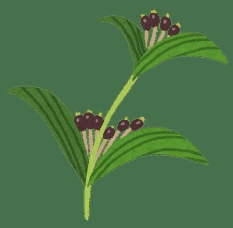 plant_hatomugi