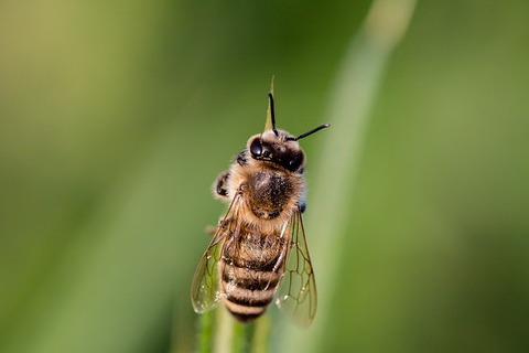 hoverfly-3454075_640