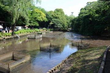 7534beb3 【衝撃】「池の水を全部抜く」をやった森林公園のその後wwwwww
