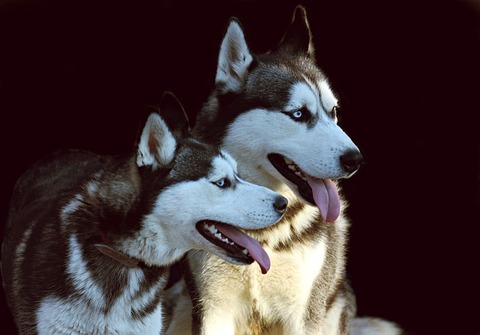 dogs-3649499_640