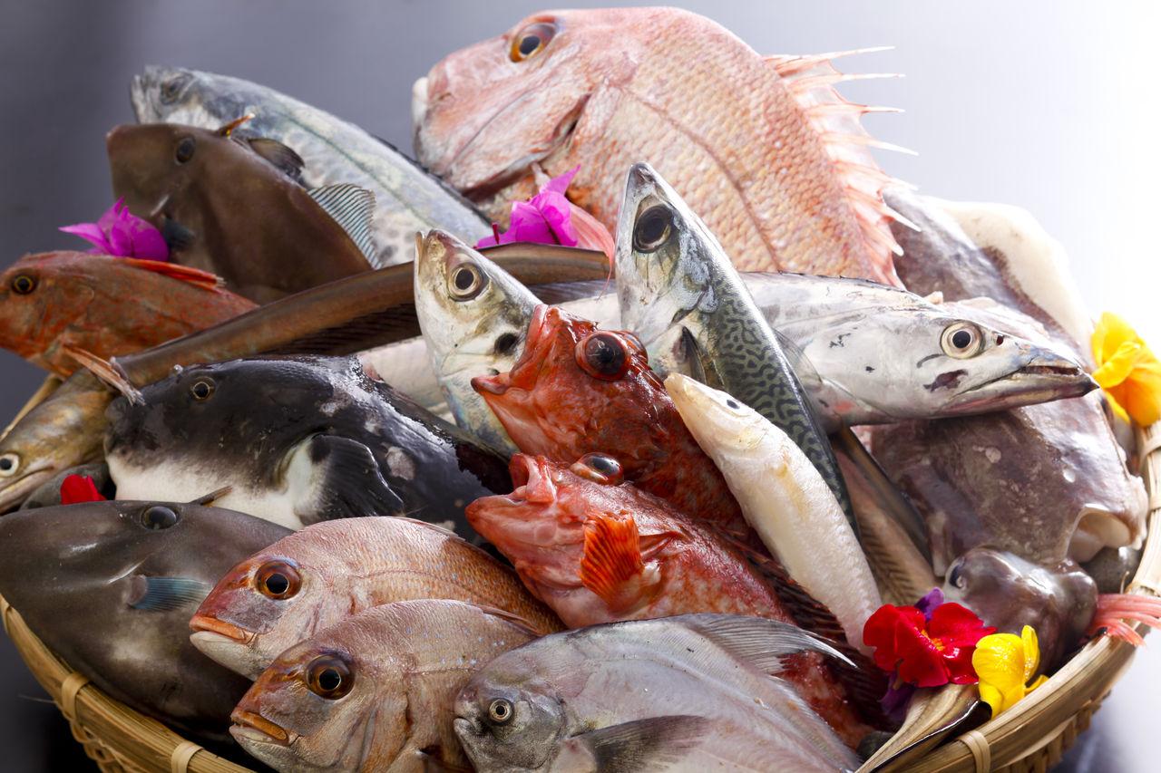 魚 的圖片結果
