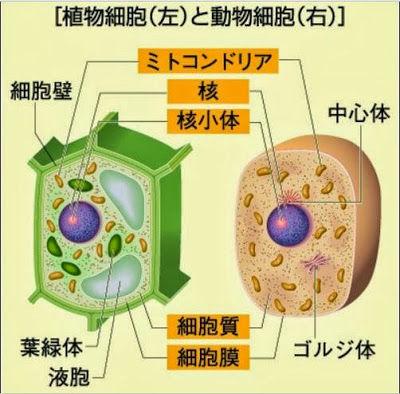 生物基礎 生物の特徴 : 生物基礎・生物