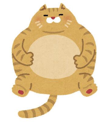 pet_fat_cat