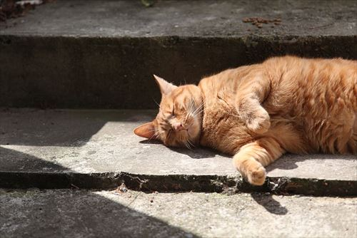 red-cat-cat-sleeping-staircase-shadow_R