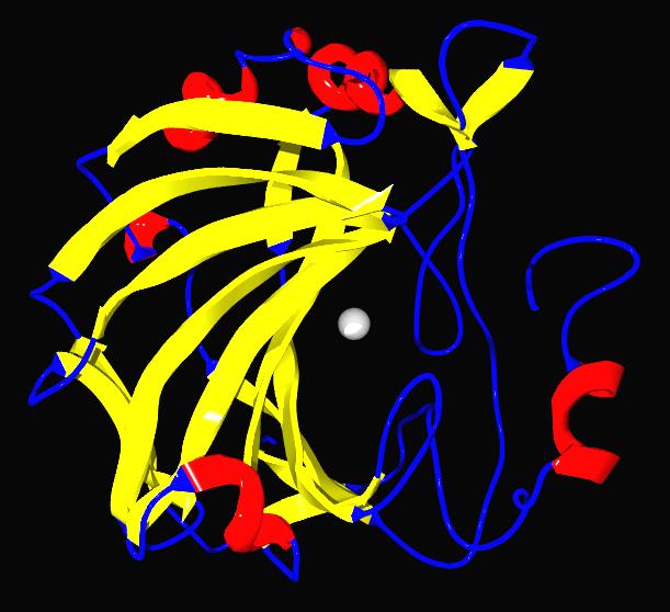 炭酸脱水酵素