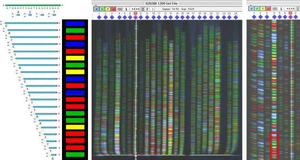 DNAシークエンス2