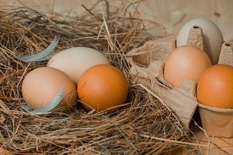 chicken-eggs-4212132_640